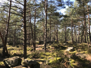 Forêt de Fontainebleau 1
