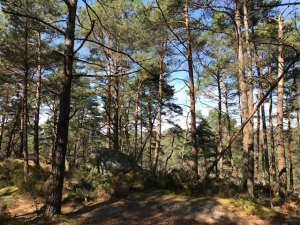 Forêt de Fontainebleau 2