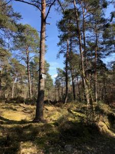 Forêt de Fontainebleau 3