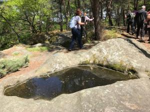 Marche nordique forêt de Fontainebleau