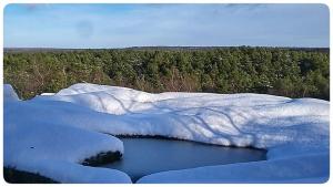 foret de fontainebleau sous la neige