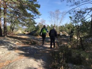 marche nordique forêt de Fontainebleau 2