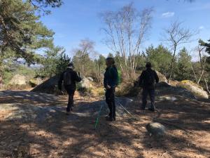 marche nordique forêt de Fontainebleau 3