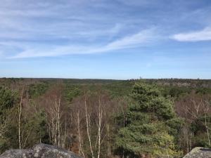 point de vue forêt de fontainebleau 1